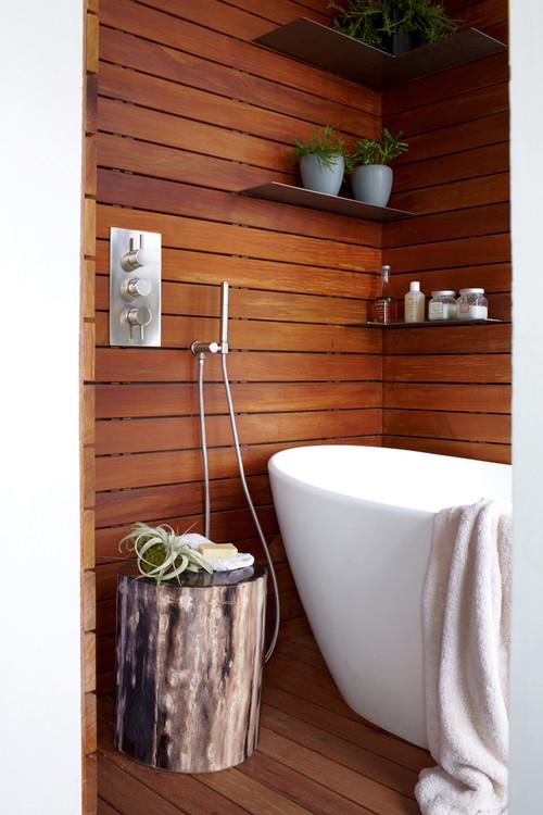 Растения, подходящие для ванной. Тилландсия