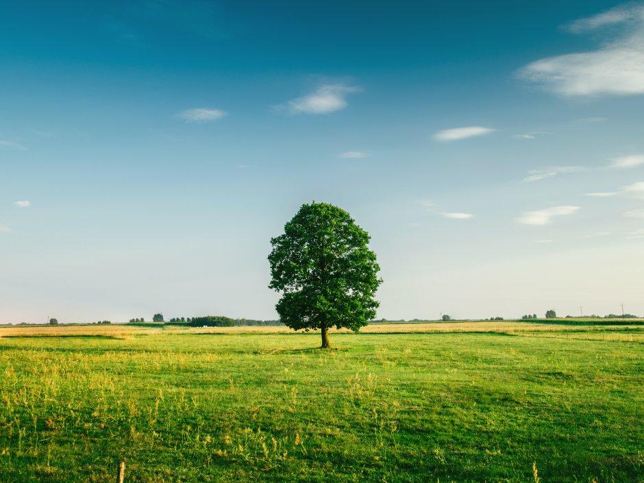 Как продать фундамент если земля в аренде