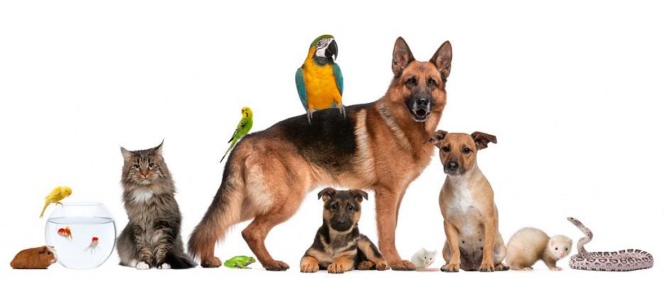 Животные в арендованной квартире
