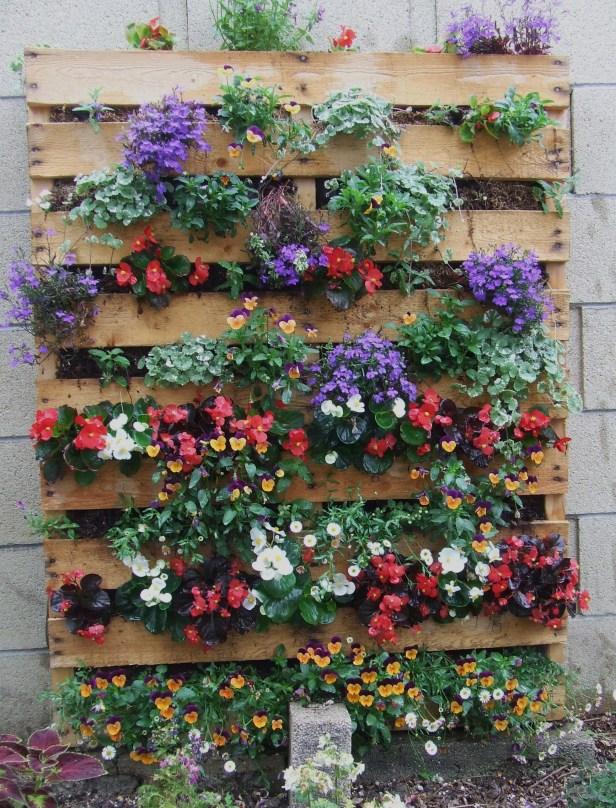 и снова цветы на балконе в паллетах