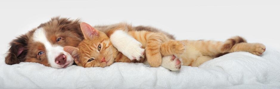 Аллергия и запах от животных