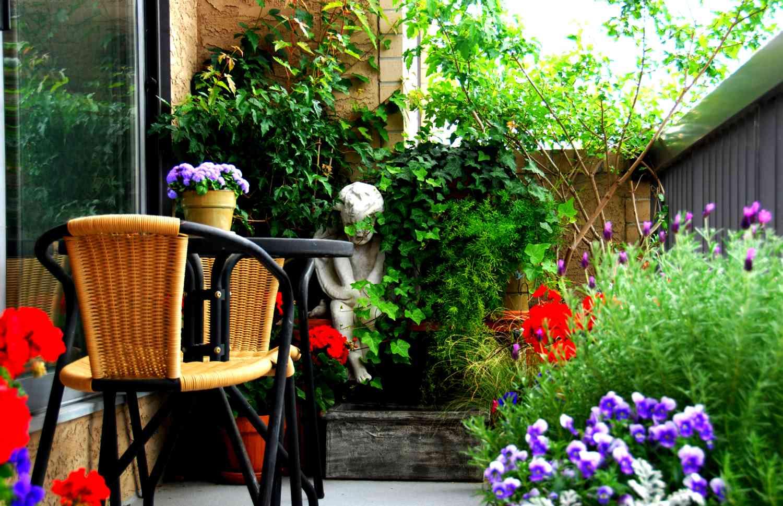 ?Из-за денег цветы на балкон несолнечная сторона прогноз погоды неделю