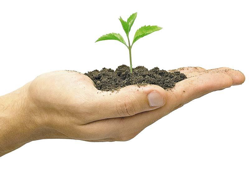 почва, плодородность