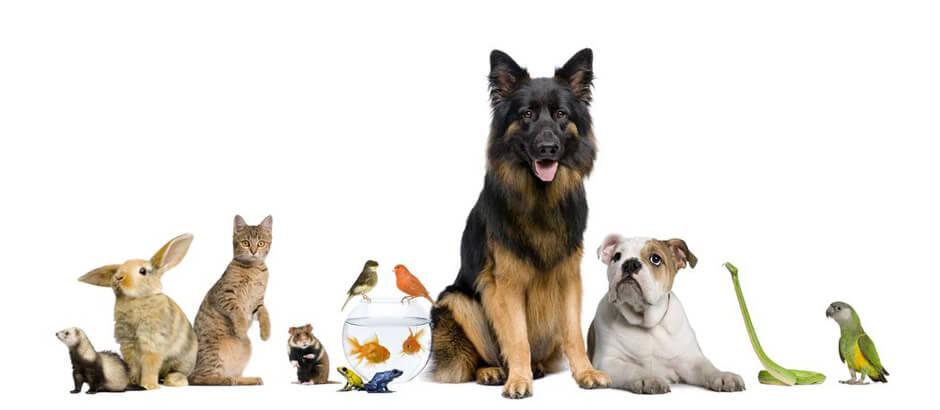 Аренда с животным