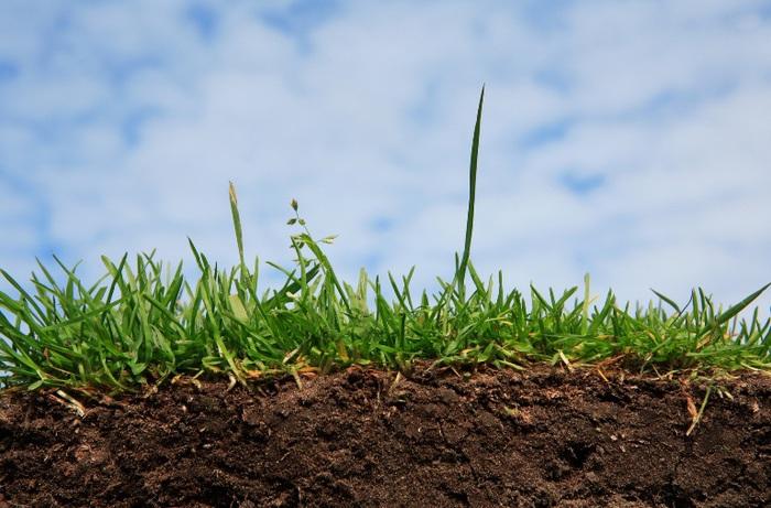 почва, кислотность, плодородность