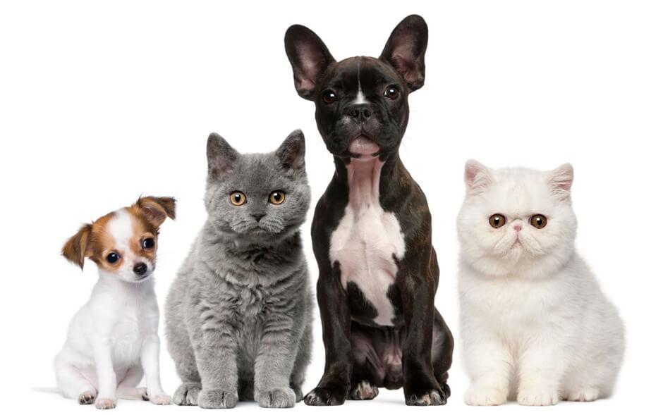 Аренда жилья: советы владельцам животных