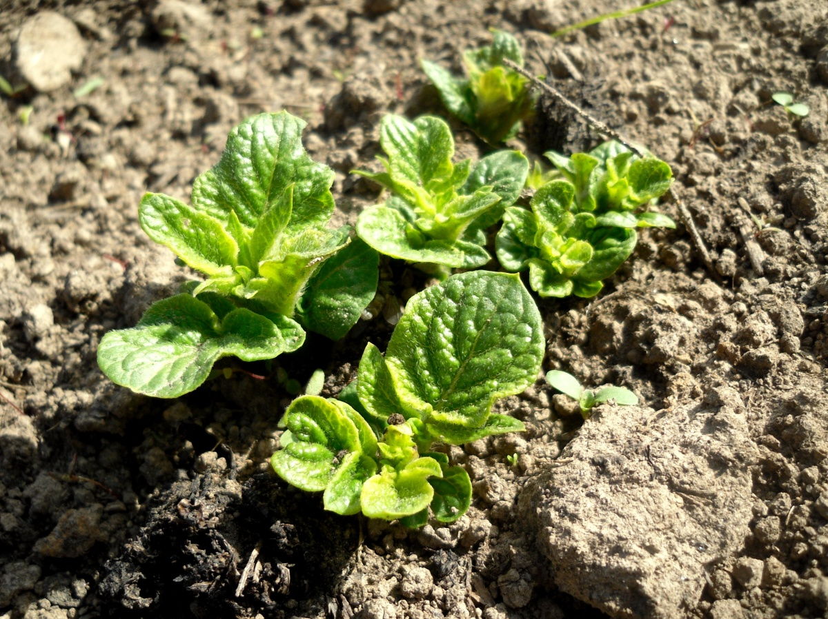 почва, плодородность, участок