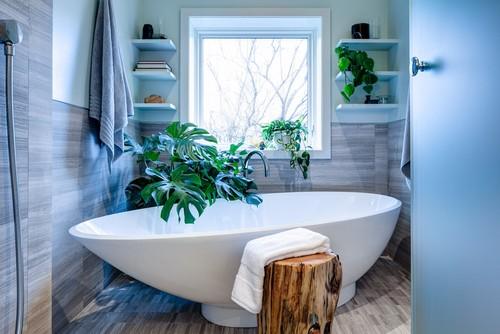 Растения, подходящие для ванной. Филодендрон долчатый