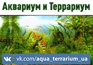 Аквариум И Террариум