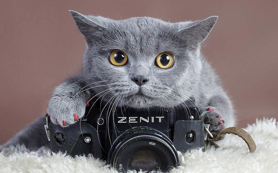 Как сфотографировать домашнее животное