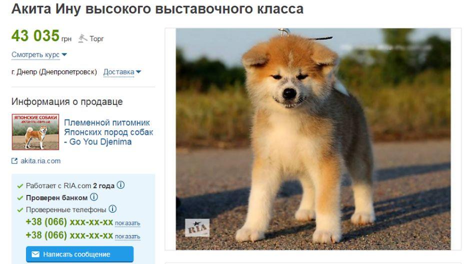 Японская собака Акита цена