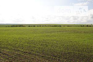 Продаж землі сільськогосподарського призначення, Хмельницький, р‑н.Ружичанка