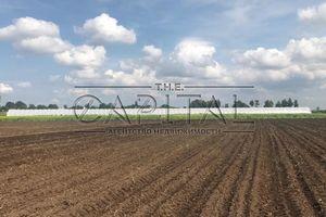 Продаж землі сільськогосподарського призначення, Житомирська, Брусилів, c.Ставище