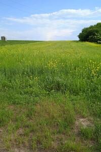 Продается земельный участок 55 соток в Волынской области