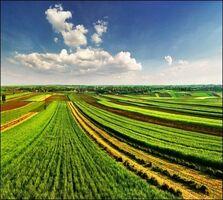 Сдается в аренду земельный участок 200 соток в Одесской области