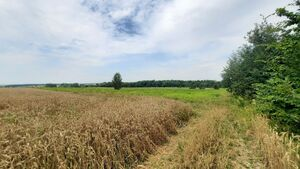 Продається земельна ділянка 70 соток у Вінницькій області