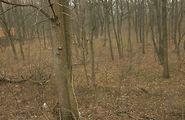 Купить землю коммерческого назначения в Харьковской области