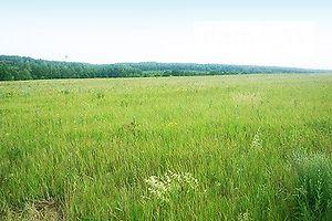 Сниму земельный участок долгосрочно в Житомирской области