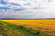 Сниму землю сельскохозяйственного назначения долгосрочно в Одесской области