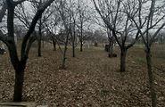 Купить землю сельскохозяйственного назначения в Луганской области