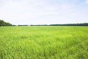 Сниму земельный участок долгосрочно в Сумской области