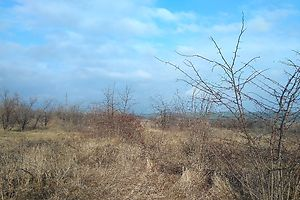 Купить недвижимость в Одесской области