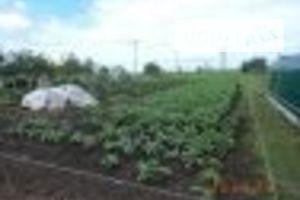 Куплю земельный участок в Яготине без посредников