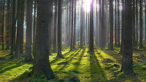 Суд вернул государству 70 га Беличанского леса