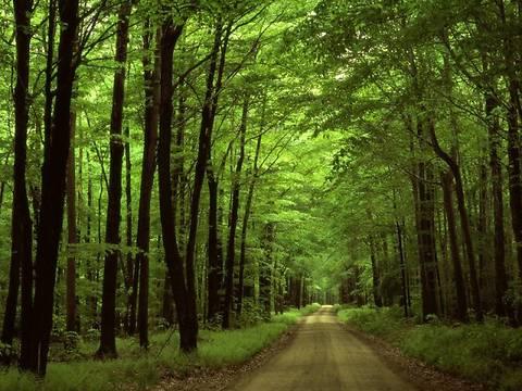Рада упростила изменение целевого назначения лесных земель