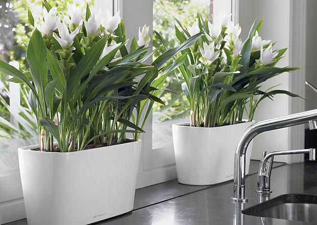 10 растений, которые выживут в офисе