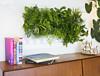 Озеленяем квартиру: какие домашние растения выбрать к весне