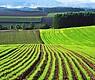 В Хмельницкой области успешно продают права аренды на землю