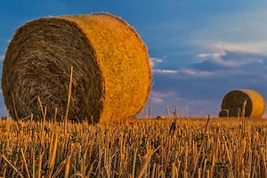 Первая в Украине ТЭС на биомассе заработает уже летом