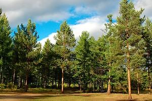 В Киеве запретили санитарную вырубку лесов