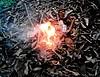 За сжигание листьев обычных киевлян будут штрафовать до 1360 грн
