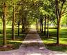 Новые ГСН сохранят парки в городах