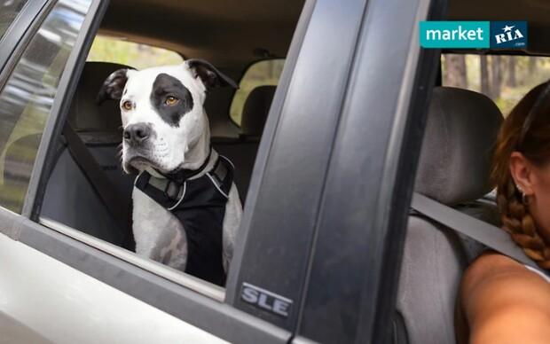 Путешествуем на авто с домашними питомцами: советы и лайфхаки