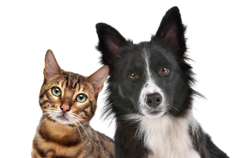 Как снять квартиру с животным