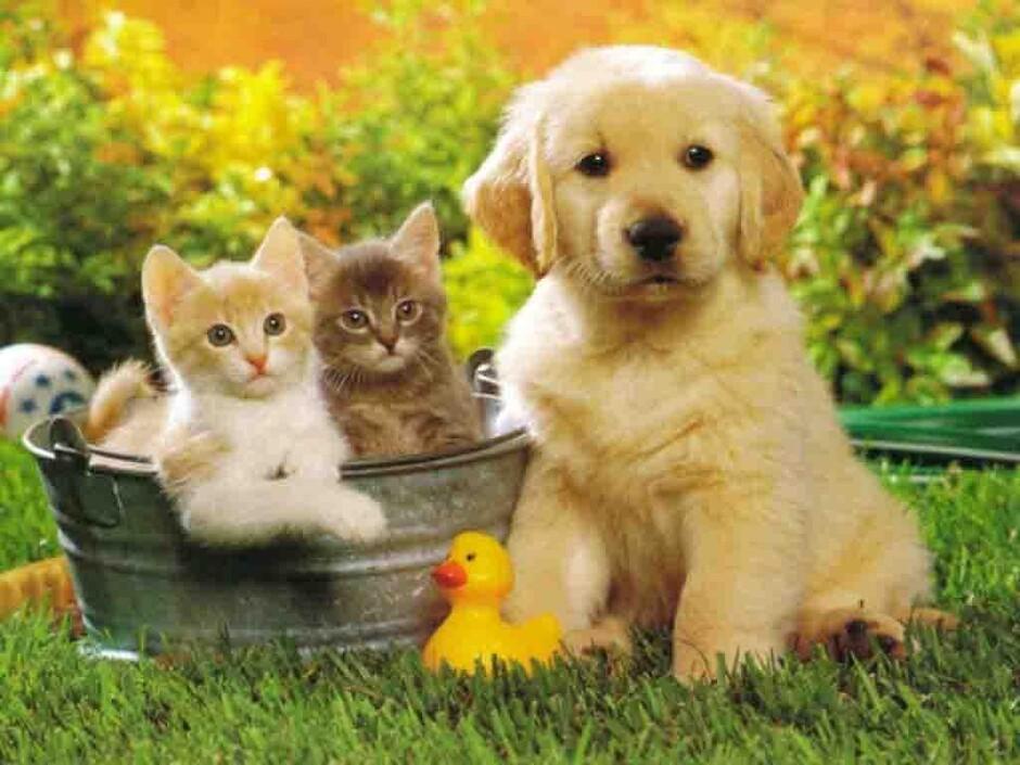 Залог за животного при аренде