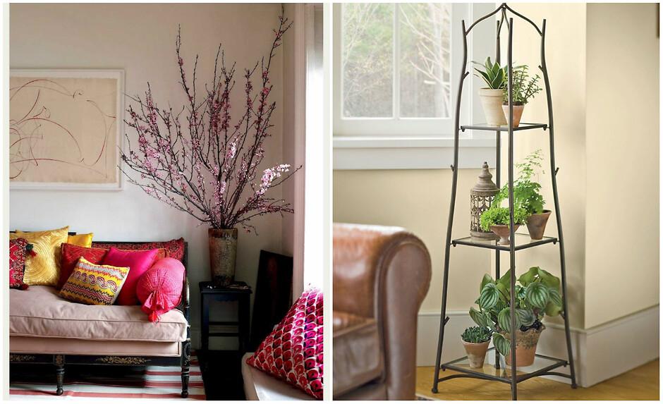 Растения в углу квартиры