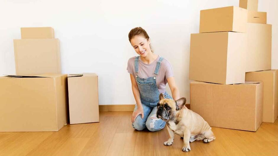 снять квартиру с животным