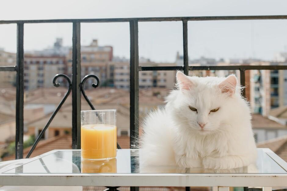 Как выгодно сдать квартиру в Киеве