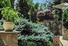 двоповерховий будинок з балконом, 550 кв. м, цегла. Здається помісячно в село Канівське, Запорізька обл. фото 5