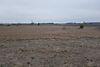 Оренда землі сільськогосподарського призначення в селі Новоселиця, ціна: договірна за об'єкт фото 5