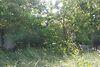 Земля под жилую застройку в селе Червоная Слобода, площадь 12 соток фото 8