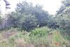 Земля под жилую застройку в Черноморске, район Ильичевск, площадь 9 соток фото 4