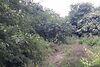 Земля под жилую застройку в Черноморске, район Ильичевск, площадь 9 соток фото 5