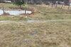 Земля под жилую застройку в селе Довжик, площадь 10 соток фото 5