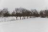 Земля под жилую застройку в селе Хижинцы, площадь 37 соток фото 8
