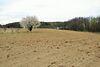 Земля под жилую застройку в селе Майдан-Чапельский, площадь 35 соток фото 6